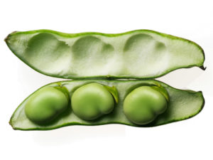 Image of broad or fava beans in an open pod