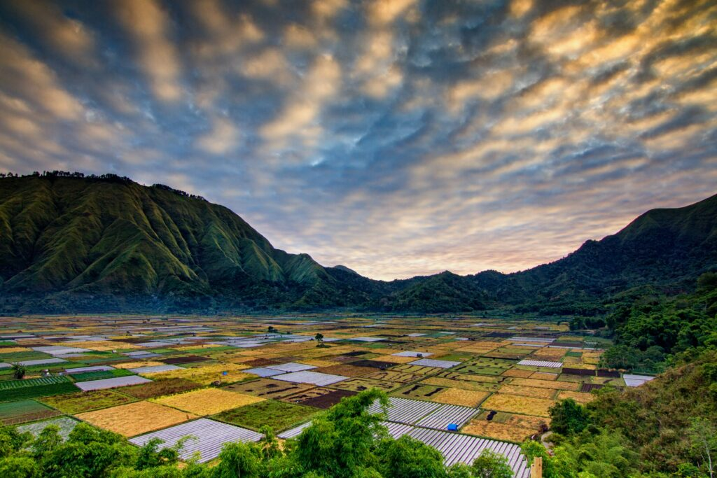 Image of Rice fields